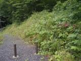 生物多様性緑化・自然回復緑化