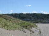 海岸砂地の緑化